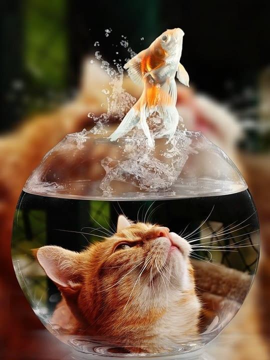 Wie sich ein Goldfisch Kunden angelt